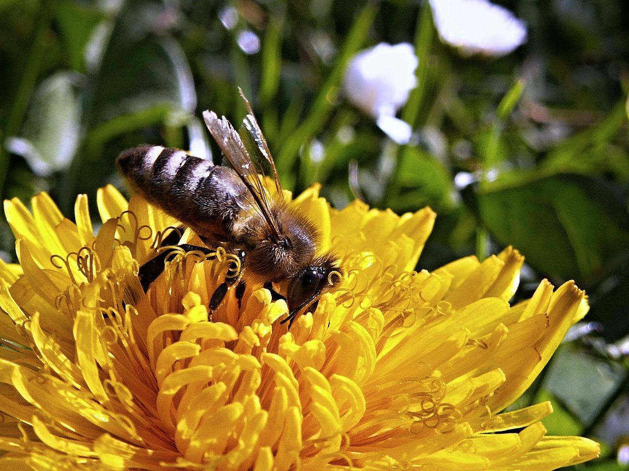 Zdravá pomoc od včiel